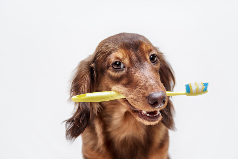 cat and dog dental care FAQs from our veterinarian in cary